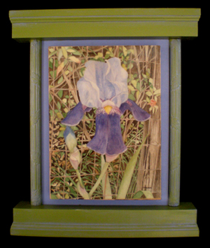 Blue Iris, The Church Flower